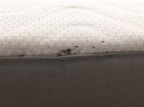 il se branle dans lit o 249 se cache la punaise de lit antipunaises fr