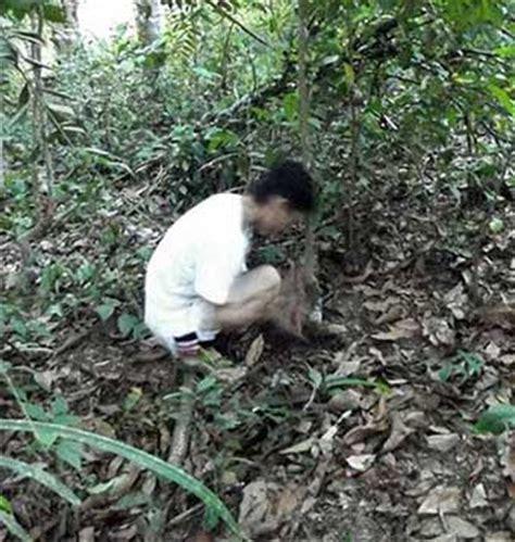 Ginseng Kalimantan juni 2013 rawin