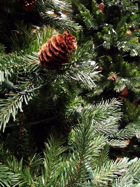 artificial christmas trees denver co douglas fir tree legrue s gallery denver co 80209