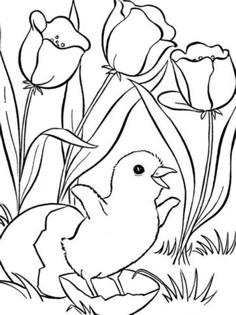 Coloring Pages Spring Flowers Flower Border