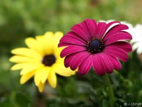 pictures of flowering plants beautiful flowers
