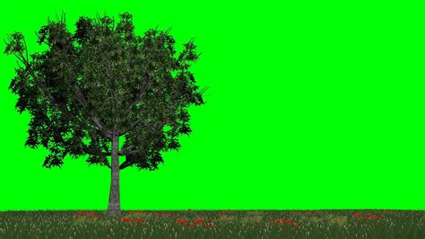 green light tree meadow with trees in the light wind free green screen