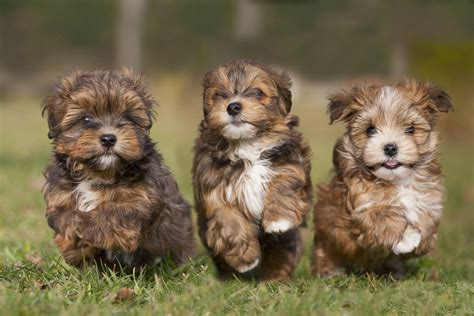 puppy day puppy it s national puppy day photos image 2 abc news