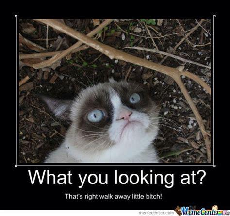 Create A Grumpy Cat Meme - grumpy cat meme by jeshu619 meme center