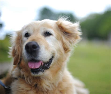 what age is a a senior for senior pets age is just a number