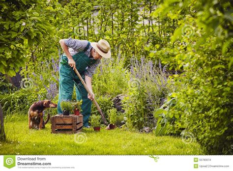 Is Working In The Garden by Gardening Work Stock Photo Image Of