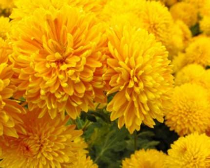 fiori dei morti i nostri servizi e i nostri eventi fiori daniela