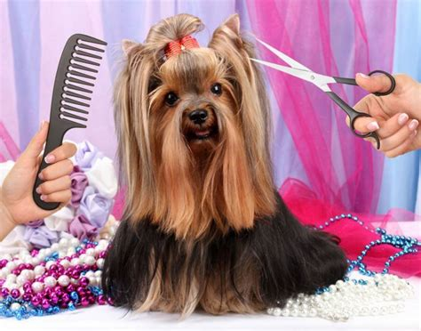 how to cut dogs hair how to cut a dogs hair om hair