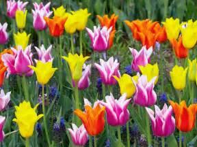Study Of Flower Colours In The Garden Residencia Santa M 243 Nica A Mar 205 A Ofrecemos El Tulipan