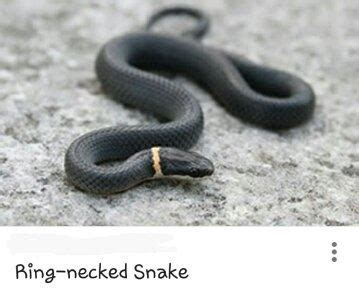 Lepaparazzi News Update Ricci And In Black Snake Moon by What Should I Do If A Snake With A Yellow Stripe Around