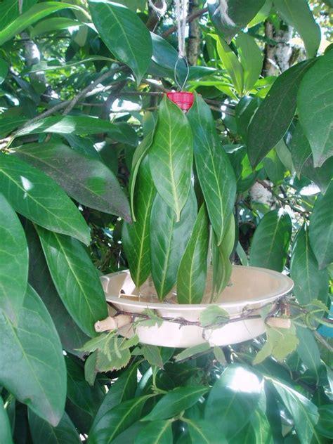 hutte oiseau une hutte mangeoire 224 oiseaux cr 233 a bracadabra