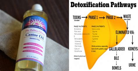 Liver Detox How To Use Castor by Here S How To Detox Your Liver And Fight And