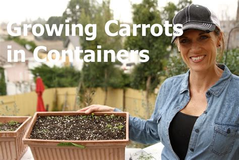Growing Carrots in Containers   How to Thin Seedlings