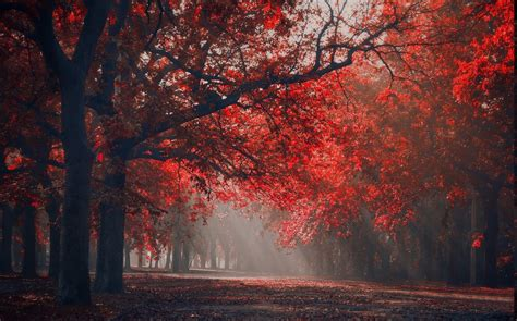 landscape nature red park sun rays trees fall