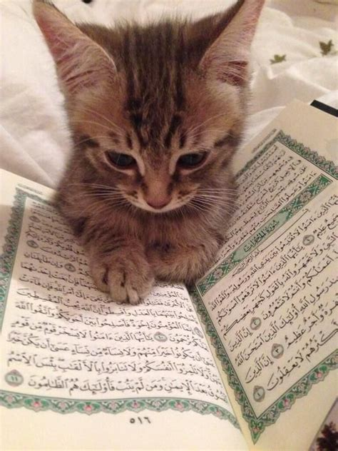 this kitten has probably read more quran than