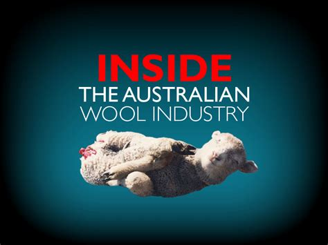 Pink Apologises To Aussie Wool Industry by Inside The Australian Wool Industry Peta