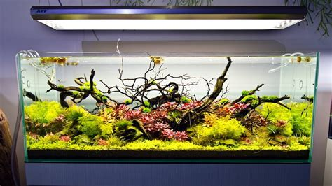 aquarium design group discus a visit to aquarium design group youtube