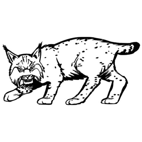 bobcat coloring page free coloring pages of drawing of a bobcat