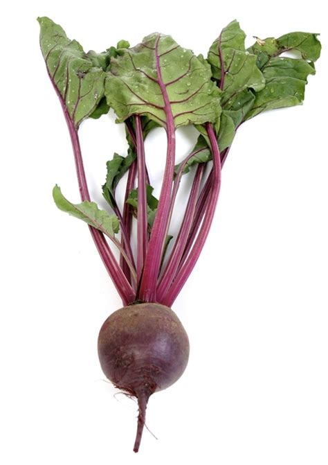 beet root vegetable a z all about the veg vrc veganrecipeclub org uk