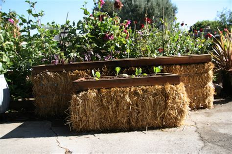 straw bale garden layout building a straw bale garden a by sunset