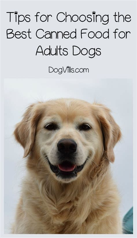 best canned puppy food what is the best canned food for dogs
