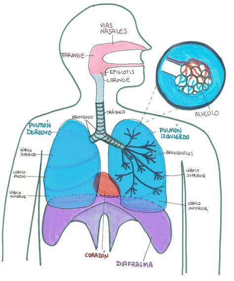 imagenes de respiracion yoga sistema respiratorio en yoga