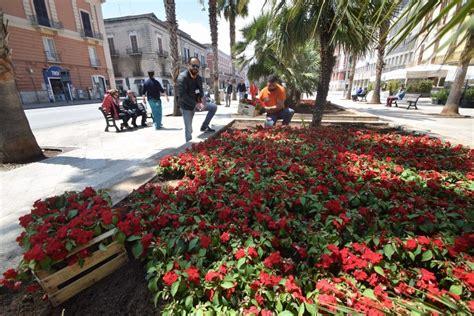 fiori bari bari pianta fiori nelle aiuole in centro per il g7