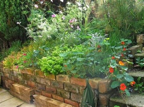 Herb Garden Design Ideas Culinary Herb Garden Layout Image Search Results