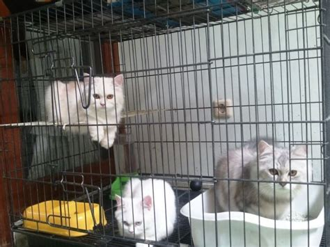 spesifikasi kandang kucing  bagus okdogicom