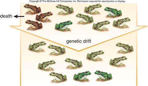 causes of microevolution