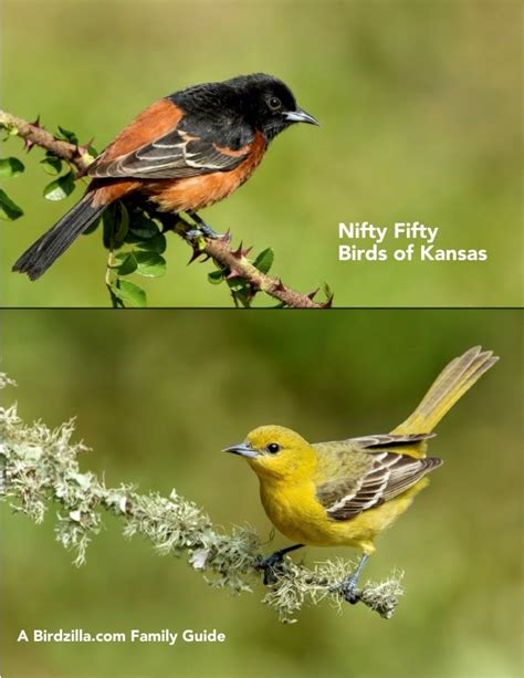 nifty fifty birds of kansas by sam crowe home garden