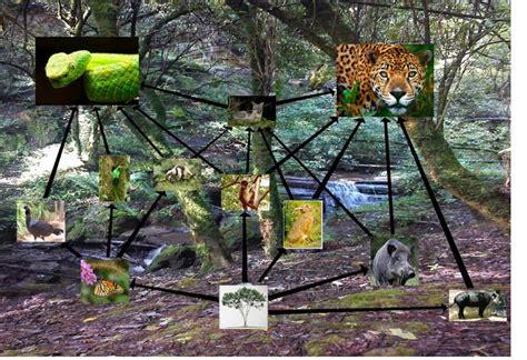 cadenas troficas bosque selva tropical perennifolia red trofica de la selva alta