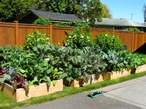 Backyard Ideas Layouts Triyae Backyard Vegetable Garden Layout Various