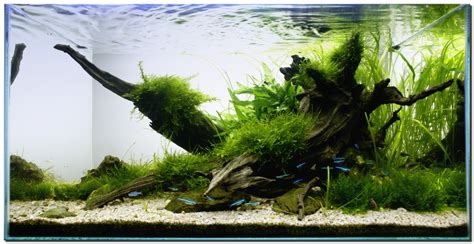 Aquascaping With Driftwood aquascape of the month november 2009 quot riverbank quot aquascaping world forum