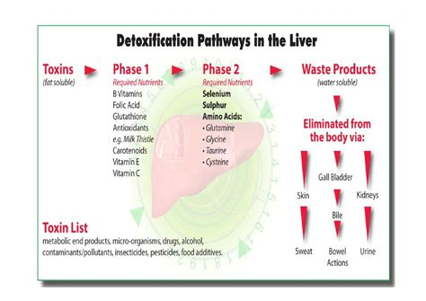 Detox Symptoms Itching by Liver Health