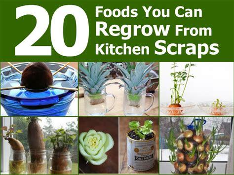 20 Foods You Can Regrow From Kitchen Scraps Diy Beauty Vegetable Scraps In Garden