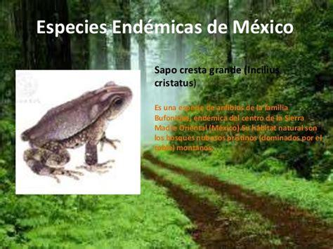 imagenes animales endemicos de mexico especies end 233 micas de m 233 xico