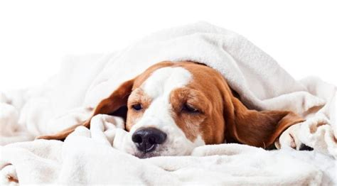 sick puppy symptoms facts about your facts about breeds health and food