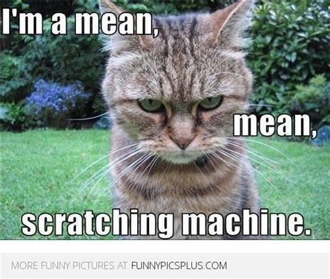 Mean Cat Memes - mean scratching machine funny pictures