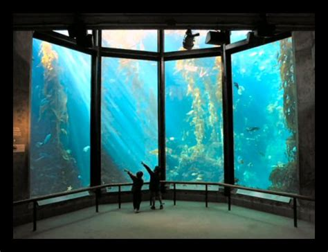 Ca Mba Package by Related Keywords Suggestions For Monterey Bay Aquarium