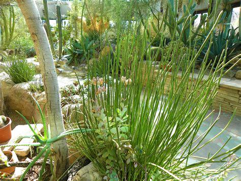 desert plants morning bray farm