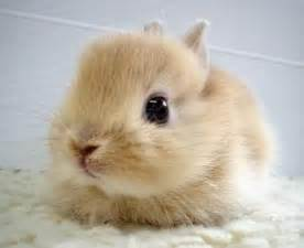 Nain Rugs For Sale Bunny Picture Request Pip The Bump
