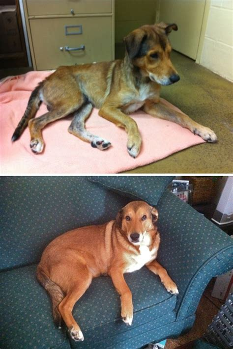 tales warming tales of rescue dogs who rescued their owners right back books 3 rescue success stories to warm your
