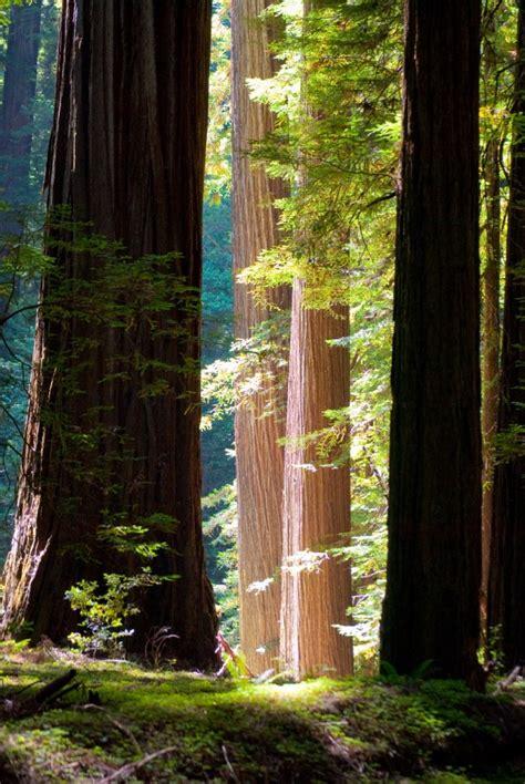 opthamologist near me an eye for eye redwood falls 2 read
