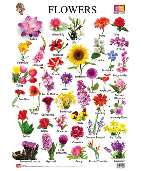 List Of Garden Flowers Common Names Flower Chart Each Flower Speaks For Itself Description From I Searched For This