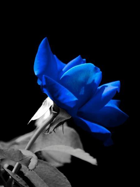 canzone fiore ste artistiche quadri e poster con canzone fiore
