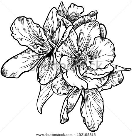 vintage flower drawing black and white google search