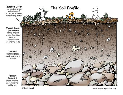 How To Find Dirt On The Dirt On Dirt Why Is Soil Important