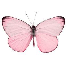 pink butterfly lights 1000 images about black white background pairs