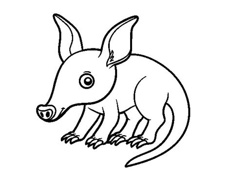 aardvark coloring page coloringcrew com